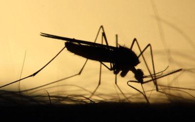 West Nile Virus – Misure di prevenzione della trasmissione trasfusionale